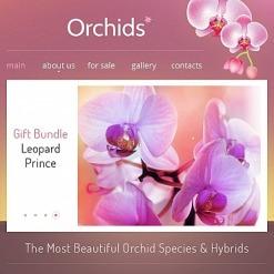 Facebook HTML CMS Vorlage für Blumen