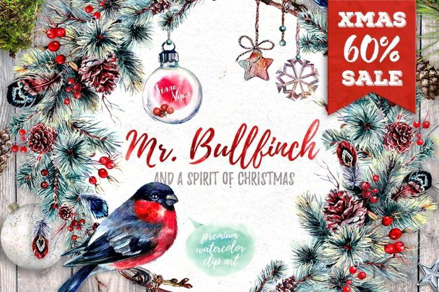 21-mr-bullfinch
