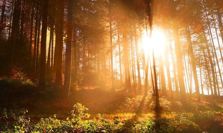 9 best eco nature wordpress themes