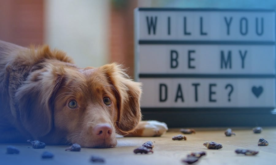Dating website where you swipe