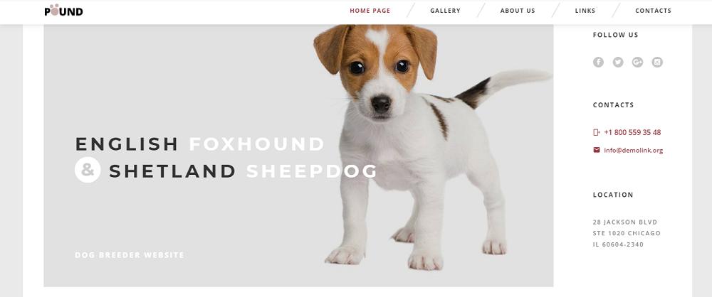 Pound - Animal Care Responsive Website Template