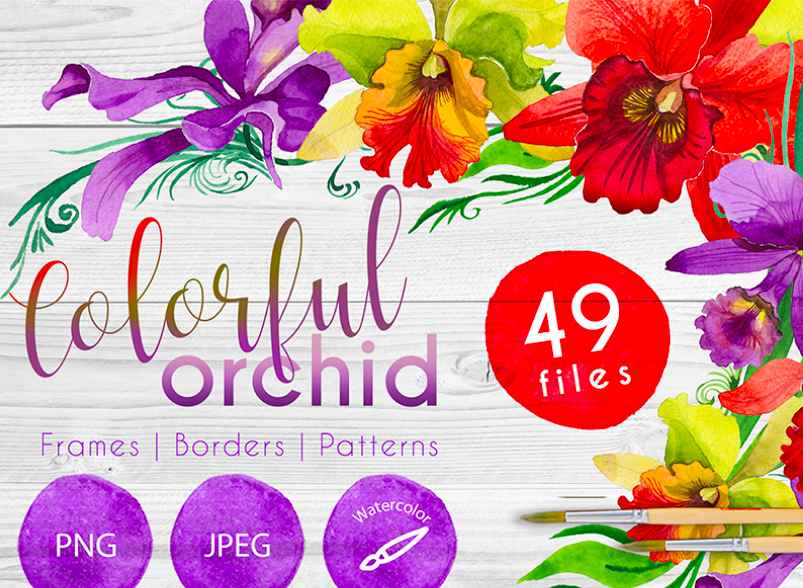 Colorful Orchid PNG Watercolor Set Illustration