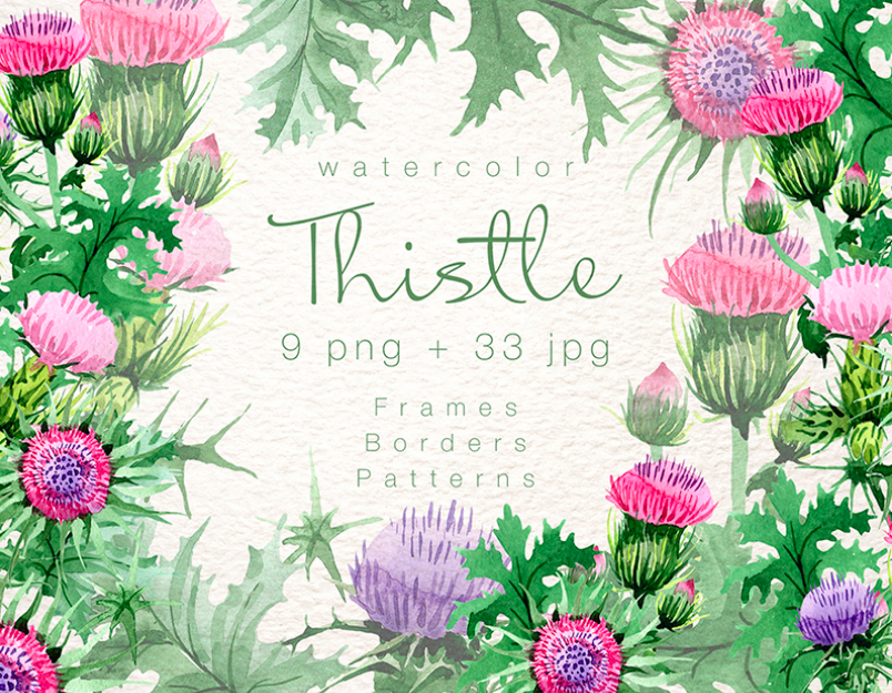 Cool Thistle PNG Watercolor Set Illustration