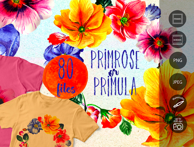 Primrose or Primula Flowers - PNG Watercolor Illustration
