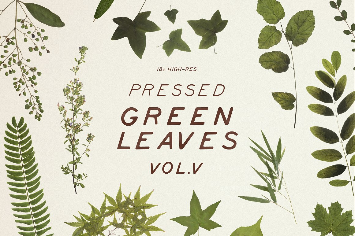 Pressed Green Leaves VOL.5 Product Mockup