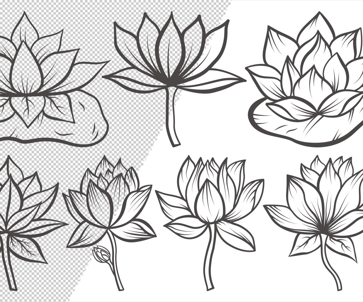 Lotus Flower Outline Bundle Drawings Illustration 106235