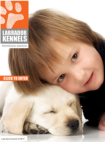 ADOBE Photoshop Template 32698 Home Page Screenshot