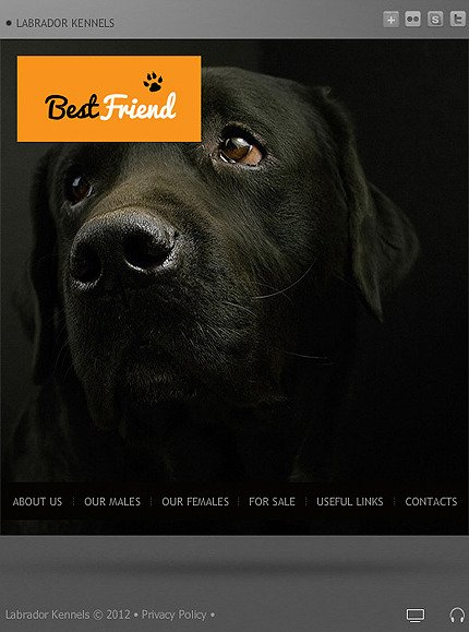 Dog Facebook Flash Template Facebook Screenshot