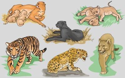 Big Cats Wild Animal PNG Drawing Set – Illustration