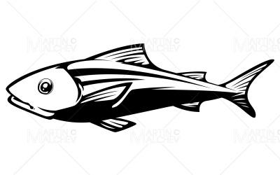 Fish on White Vector Illustration