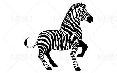 Zebra on White Vector Illustration