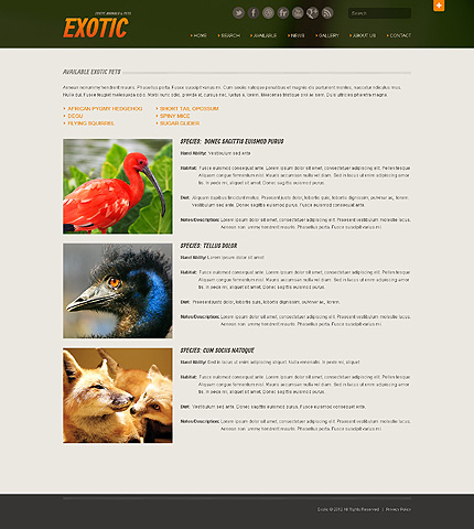 Template 40510 ( Available Page ) ADOBE Photoshop Screenshot