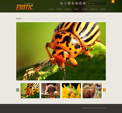 Template 40510 ( Gallery Page ) ADOBE Photoshop Screenshot