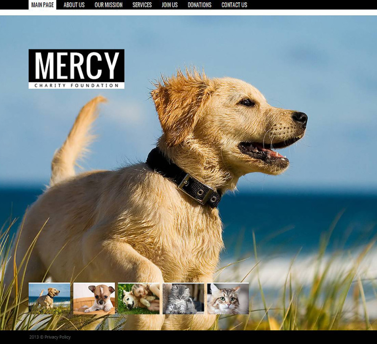 Animal Shelter Moto CMS HTML Template New Screenshots BIG