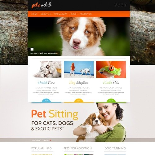 Pets Club - WordPress Template based on Bootstrap