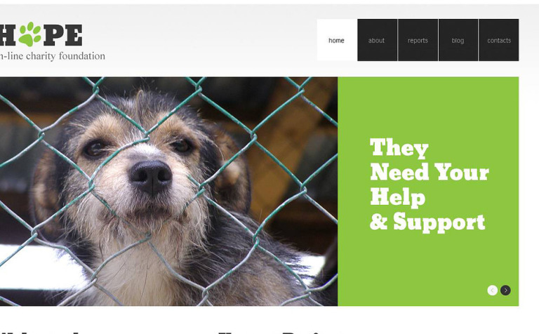 Clear Animal Shelter WordPress Theme