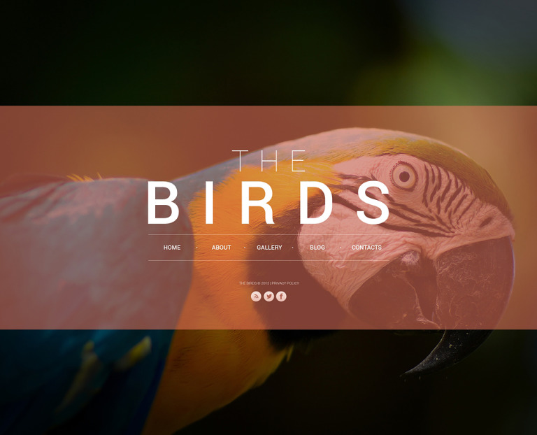 Birds Website Template New Screenshots BIG