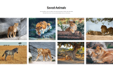 WildLife - Wild Life Multipage Creative HTML Website Template