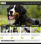 Animals & Pets Flash CMS  Template 46047