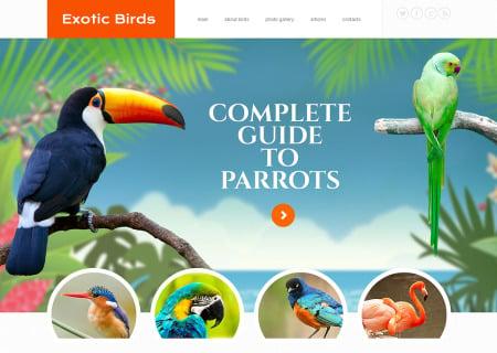 Birds Responsive