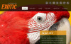Exotic Pets Facebook HTML CMS Template New Screenshots BIG