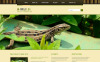 Modello Joomla Responsive #46373 per Un Sito di Animali Selvaggi New Screenshots BIG