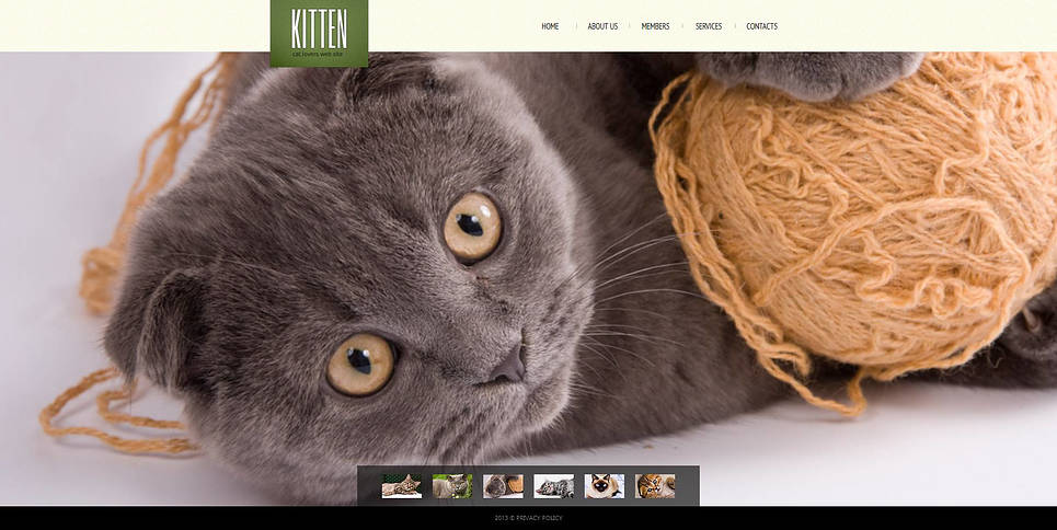 Cats Club Website Template with Lovely Kittens on the Background - image