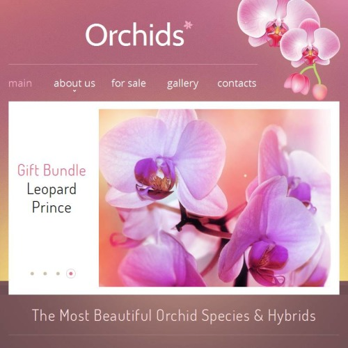 Orchids - Facebook HTML CMS Template