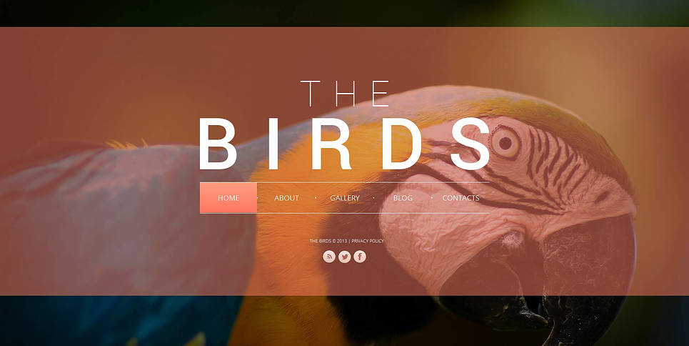 Birds Website Template with Darkened Background Pictures - image