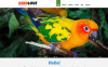 Адаптивний Joomla шаблон на тему птахи New Screenshots BIG