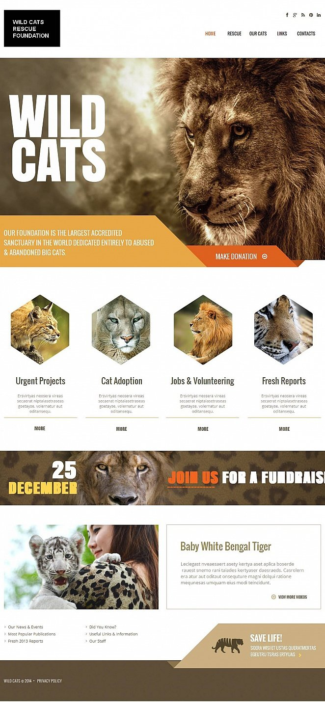 Wild Cats Website Template with Creative Geometrical Shapes - image