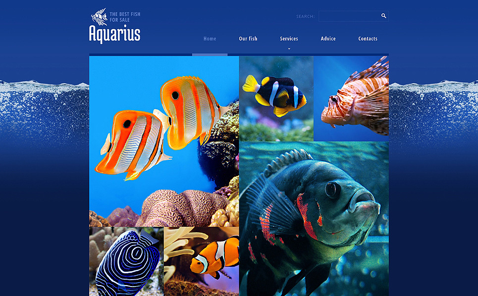 Responsive Website Vorlage für Fisch  New Screenshots BIG