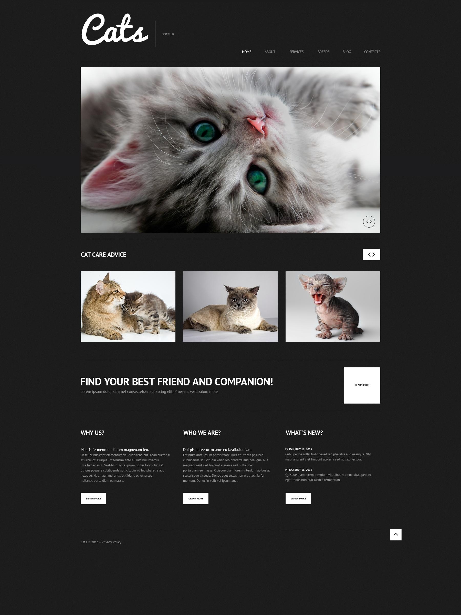 Адаптивний WordPress шаблон на тему коти №50613