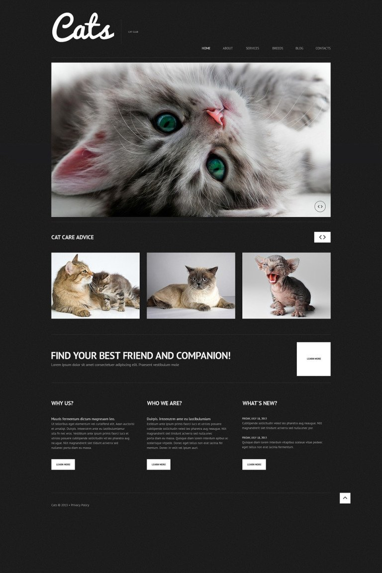 Cat Responsive WordPress Theme New Screenshots BIG