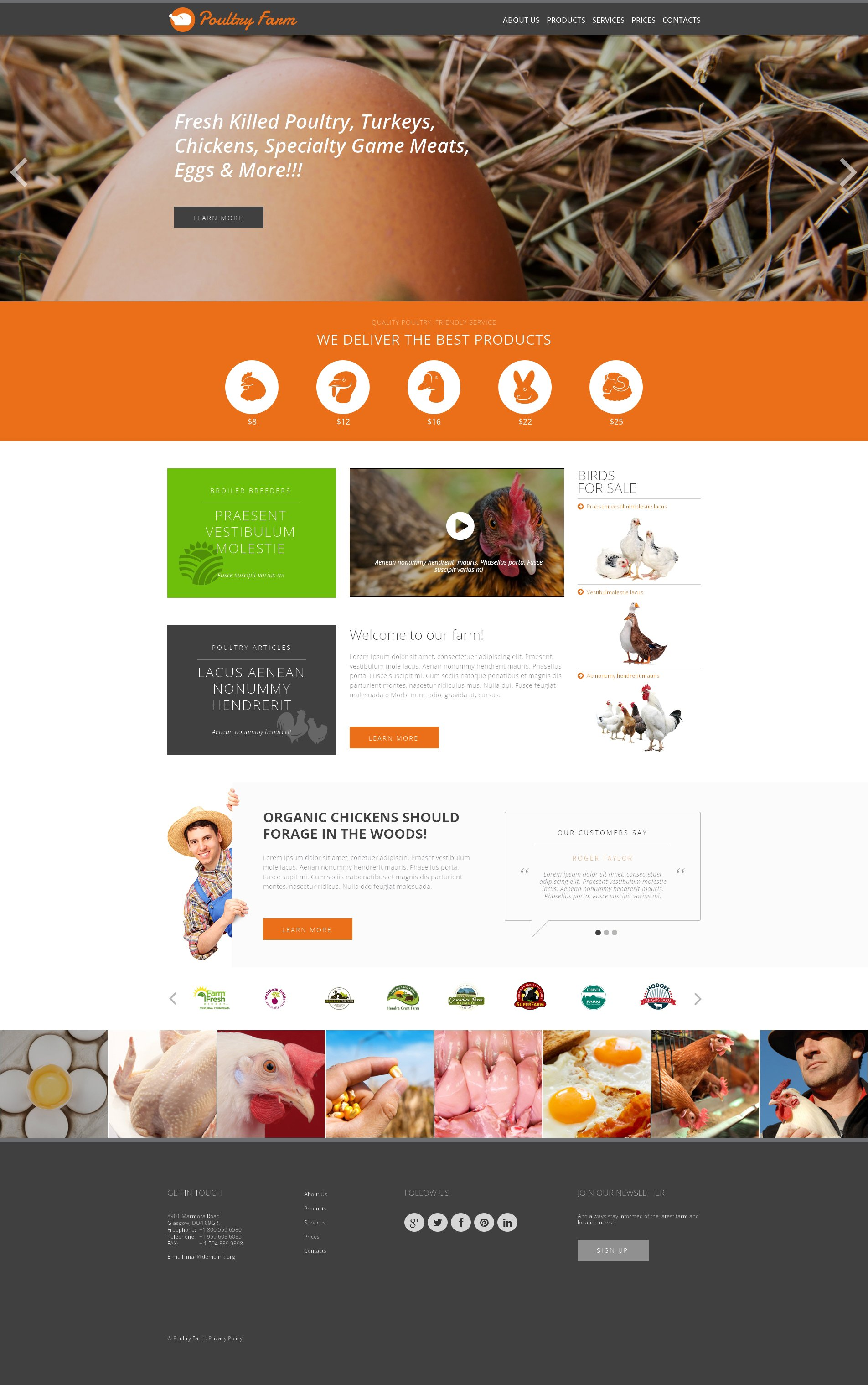 Poultry Farm Responsive Website Template