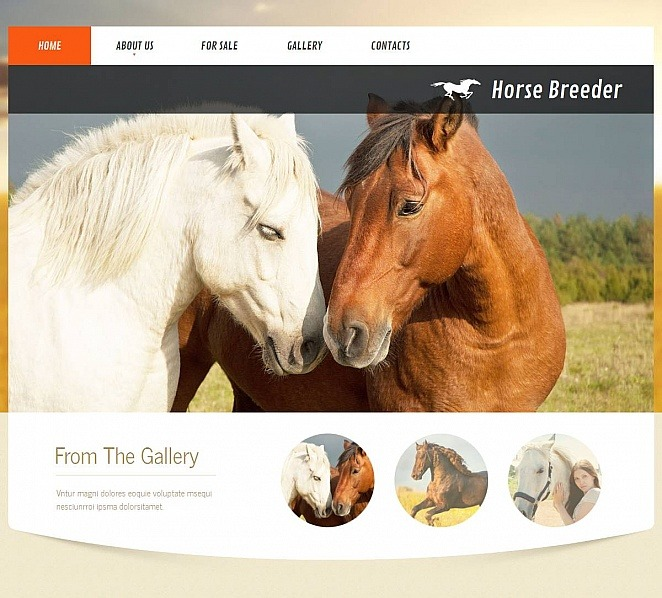MotoCMS HTML шаблон на тему коні New Screenshots BIG
