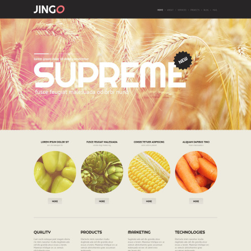 Jingo - HTML5 WordPress Template