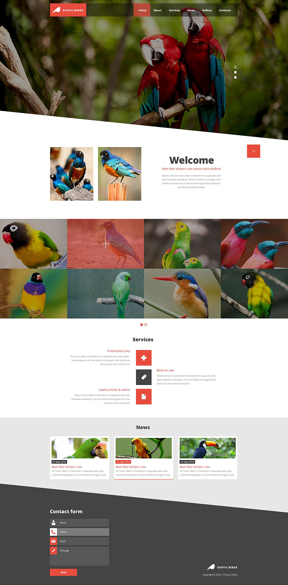Exotic Birds template illustration image