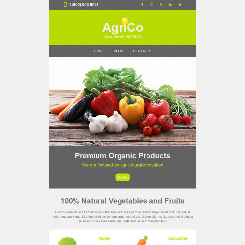 Agrico - Responsive Newsletter Template