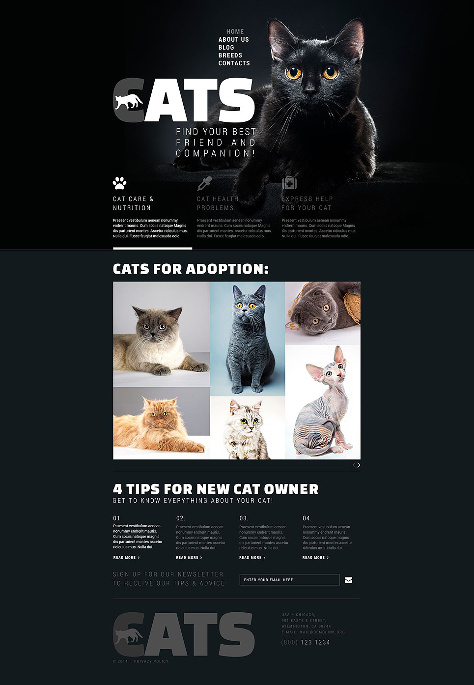 Cats Club Website Template New Screenshots BIG