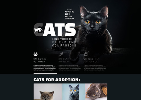 Cats Club