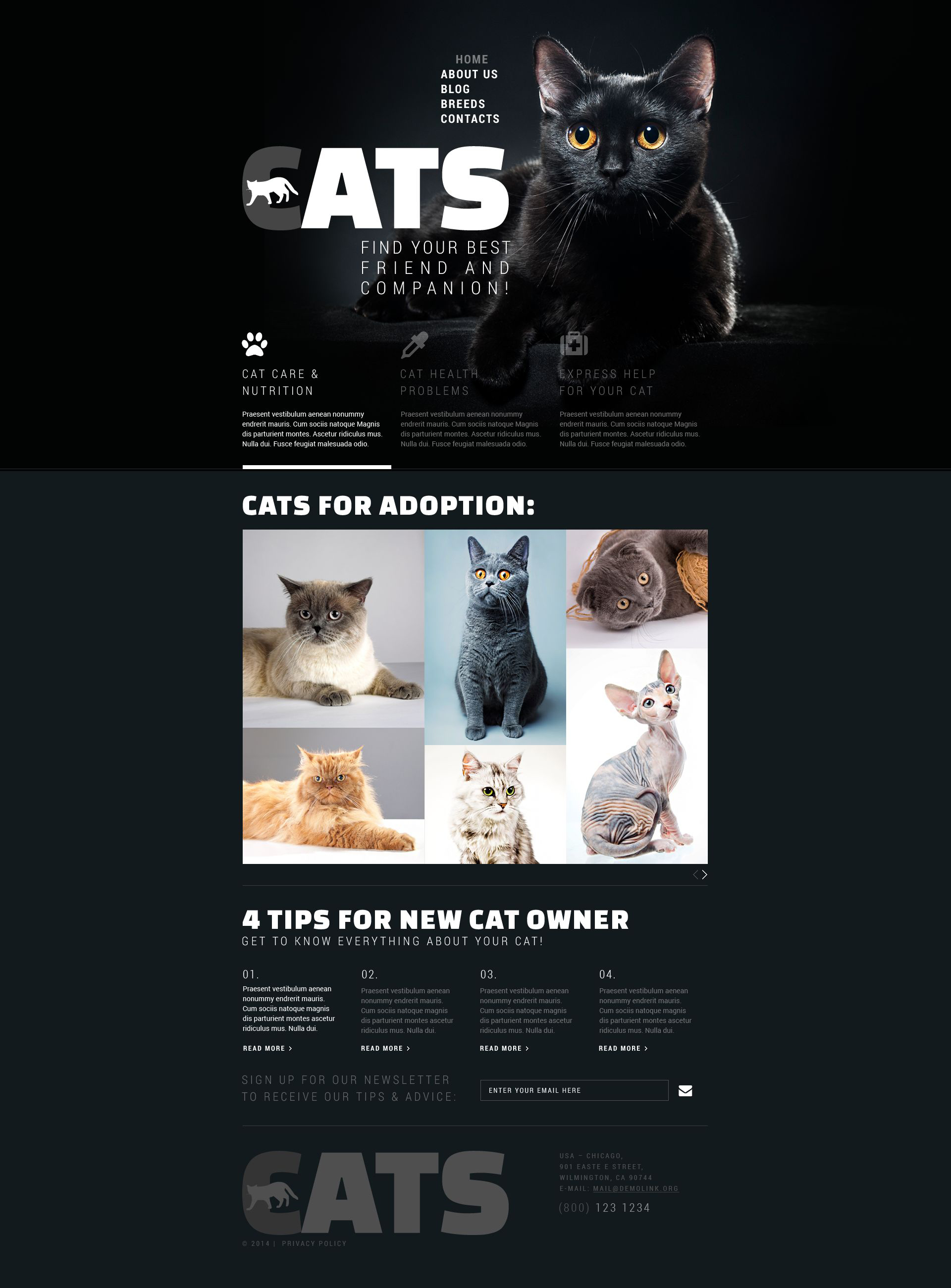 Reszponzív Cats Club Weboldal sablon 52878