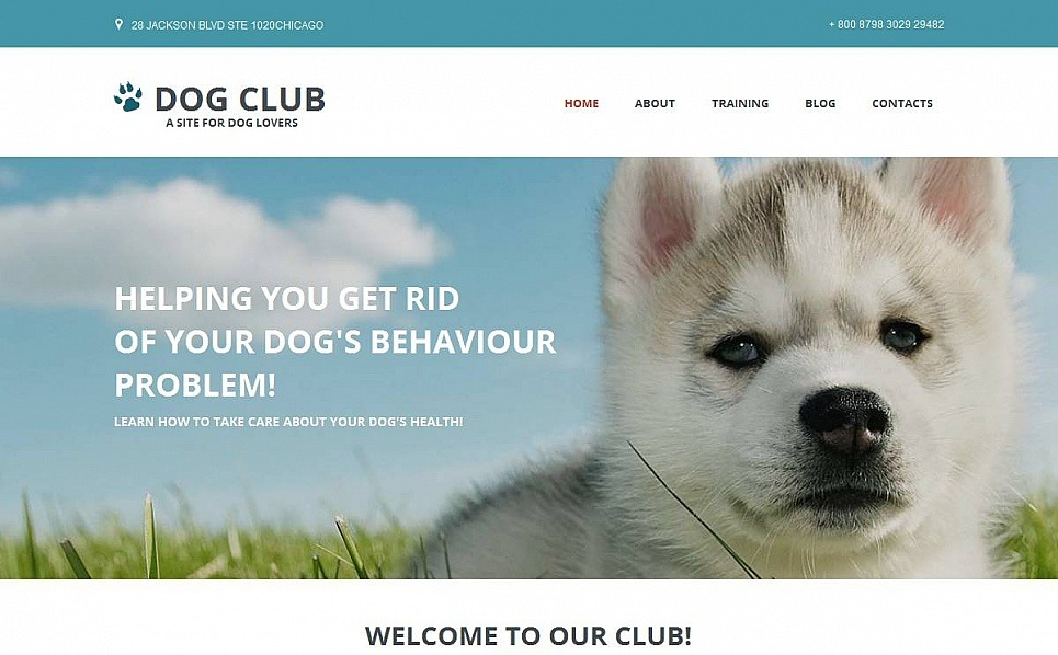 Template Moto CMS HTML para Sites de Cachorros №53048 New Screenshots BIG
