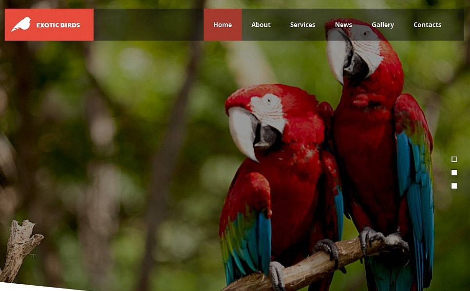 Premium Moto CMS HTML Template over Vogels New Screenshots BIG