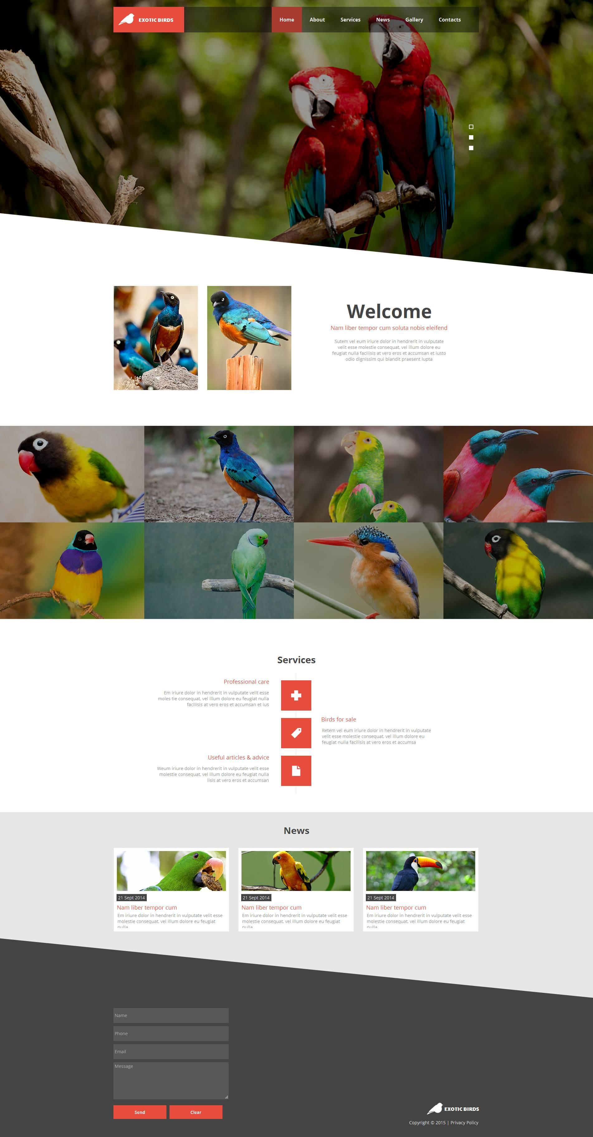 Modello Moto CMS HTML #53231 per Un Sito di Uccelli