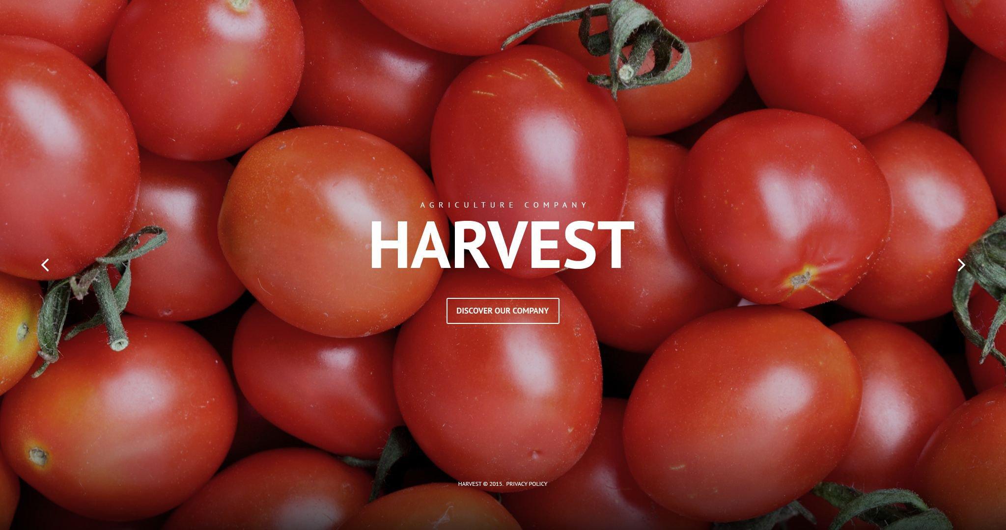 """Harvest"" - PSD шаблон №55913"