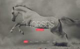 Responsivt Horses - Horse Responsive Creative HTML Hemsidemall