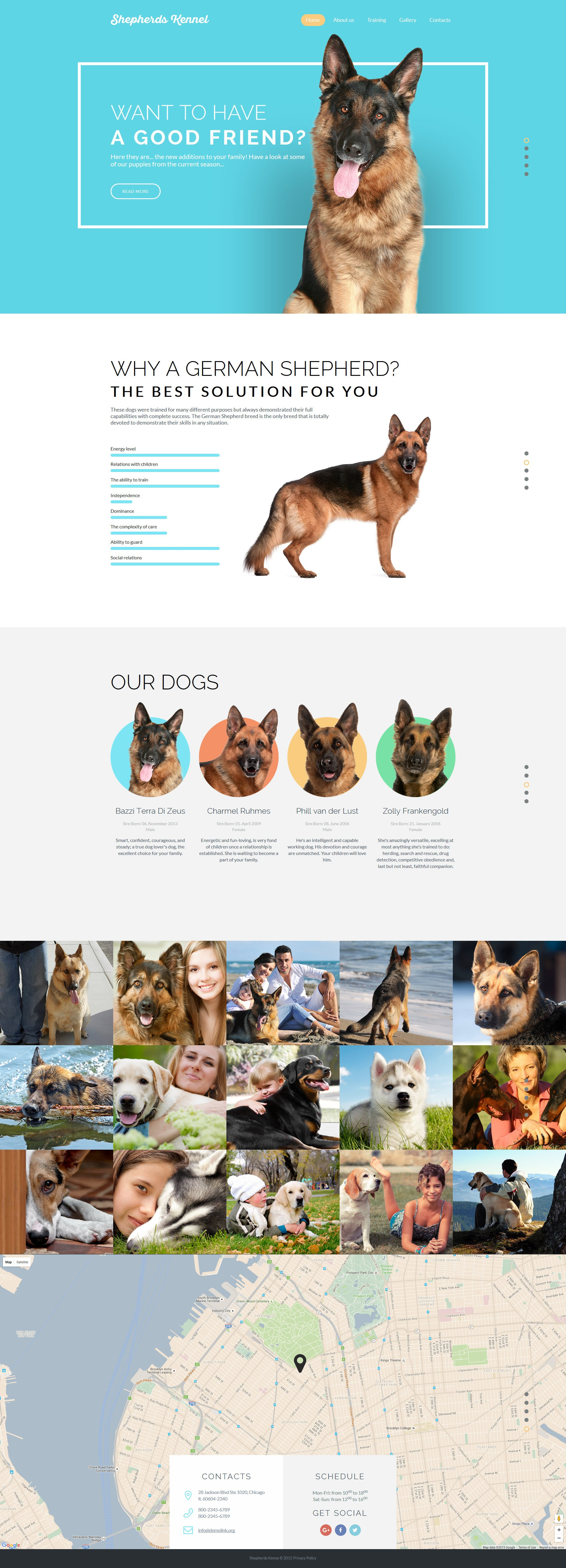 Reszponzív Kutyák témakörű Weboldal sablon 57575