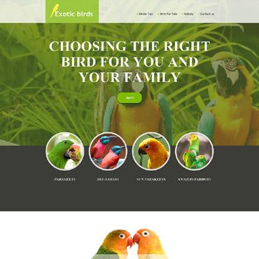 Купить Muse шаблон сайта о экзотических птицах - Exotic birds. Купить шаблон #57607 и создать сайт.