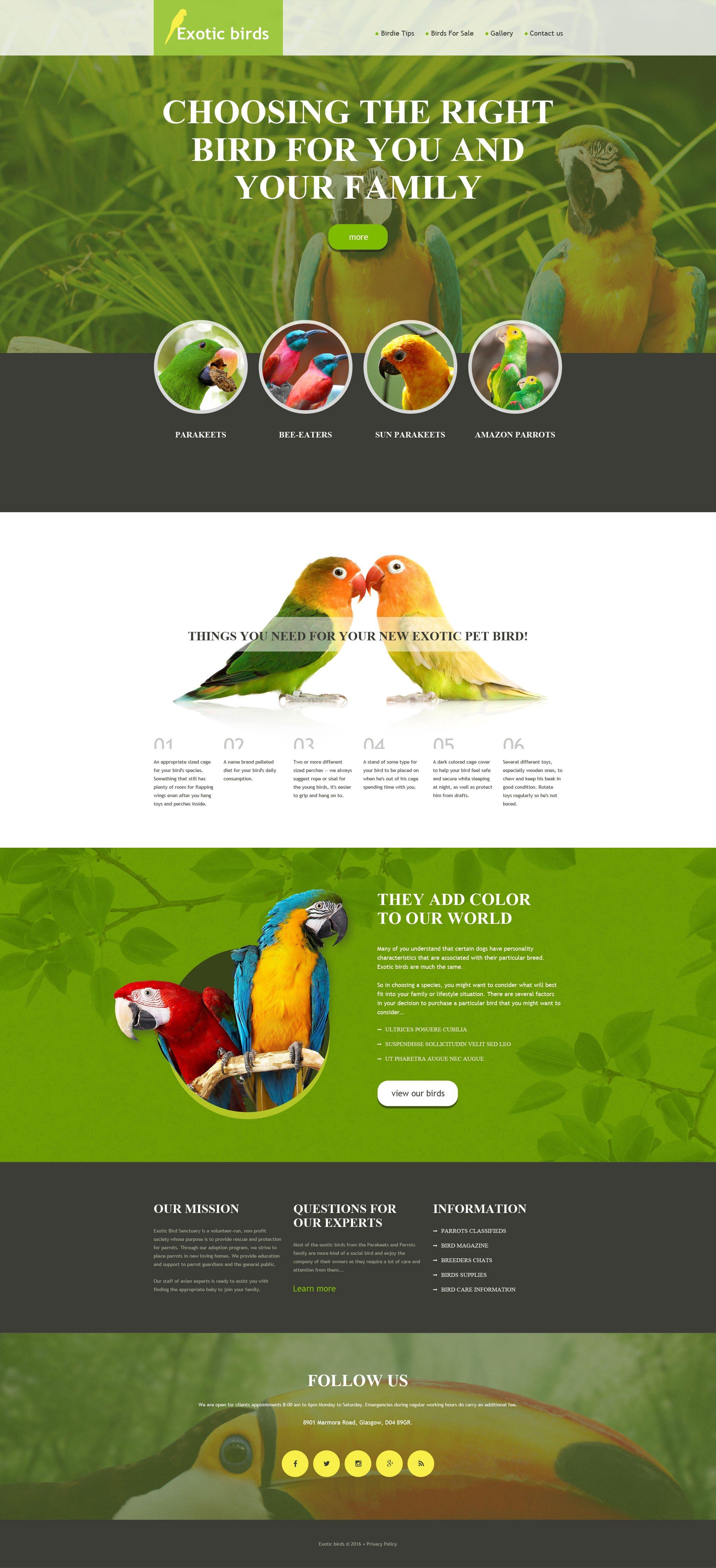 Szablon Muse #57607 na temat: ptaki